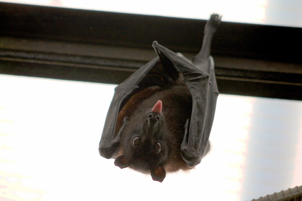 bats in your attic